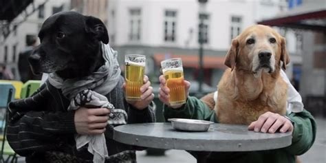 human dogs the best dogs with human you ll see today