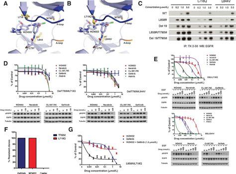 egfr inhibitors compare egfr inhibitors egfr mutations and resistance to irreversible pyrimidine