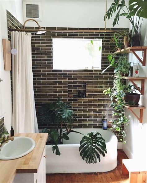 Quelle Plante Dans Une Salle De Bain quelle plante peut on mettre dans une salle de bain