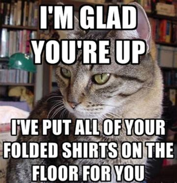 Internet Cat Meme - internet memes love them or hate them they can serve a