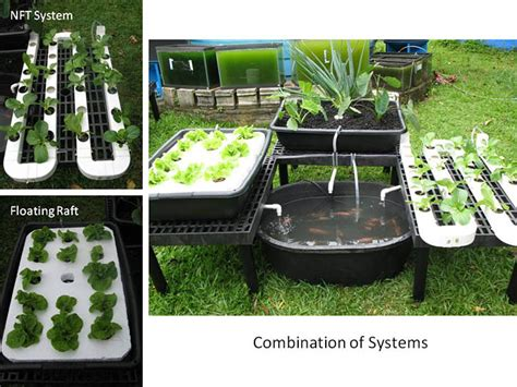 backyard aquaponics plans