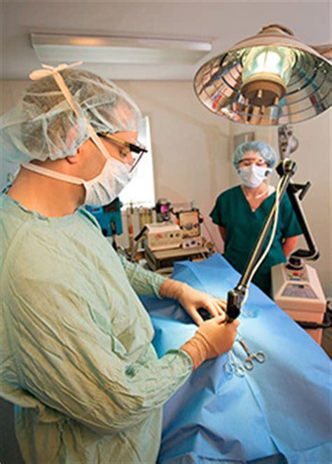 veterinary assistants and laboratory animal caretakers occupational outlook handbook u s