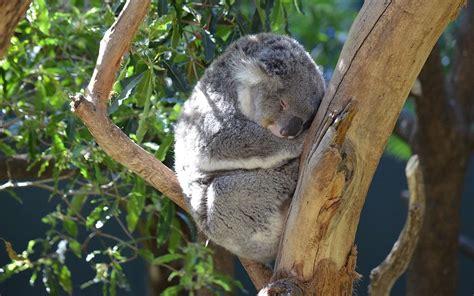 animal dormeur quel est l animal qui dort le plus et celui qui dort le