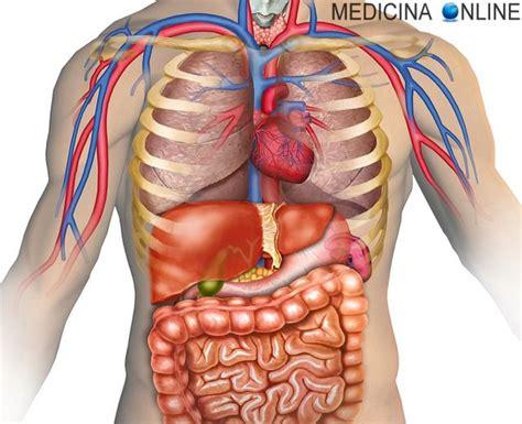 organi interni medicina anatomia organi interni umani italiano
