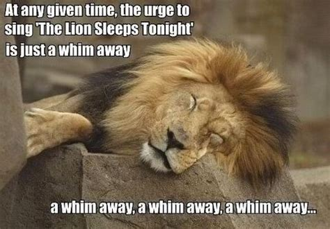 Lion Sex Meme - funny animal memes tumblr