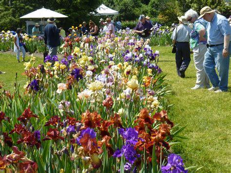 Presby Iris Garden by Is In Bloom At Presby Memorial Iris Gardens In