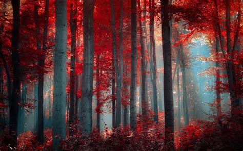 black and white tree wallpaper once upon a time red forest 33536 1920x1200 px hdwallsource com