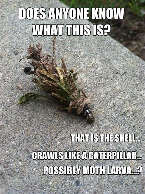 Moth Meme - moth caterpillar memes