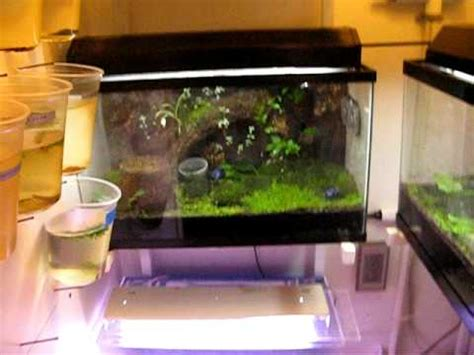 what is a frog room my poison dart frog room