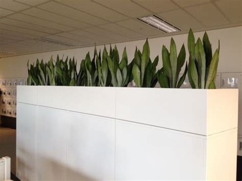 plant partition 19 best indoor partition images on pinterest gardening landscaping and green plants