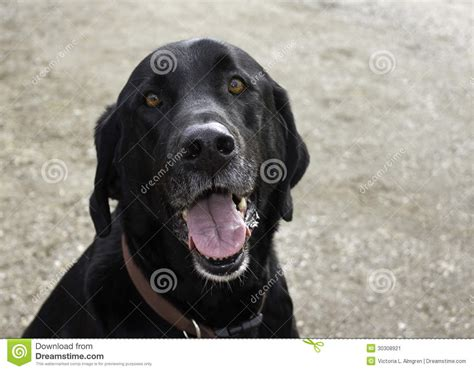 blackdog cat 2013 talking stock image image 30308921