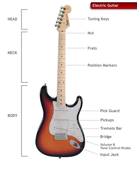 electric guitar anatomy human anatomy