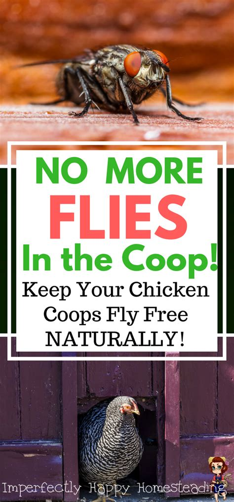 backyard chickens and flies no more flies in the coop keep your chicken coops fly