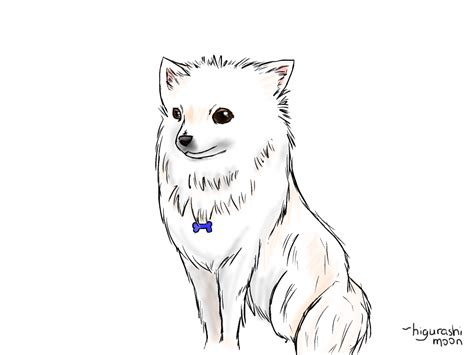 how to a pomeranian how to draw pomeranians
