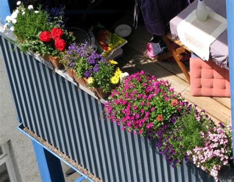 Small Patio Canopy Plant Breeding Balcony Beautiful Flowers Combined In