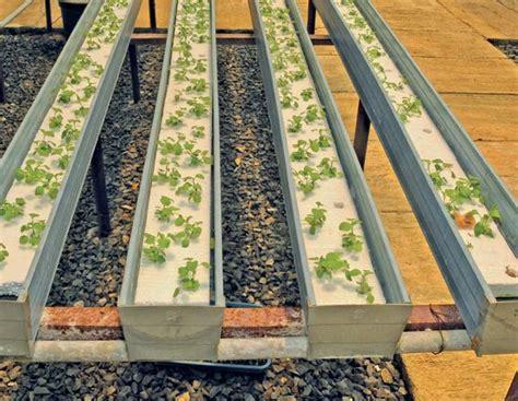 Pipa Tanaman Hidroponik budi daya tanaman hidroponik dinamis the taman dayu ciputra