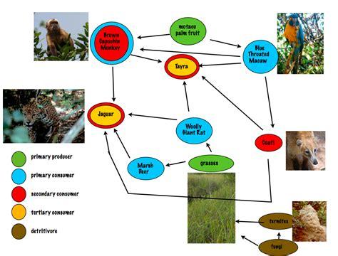 monkey food chain diagram spider monkey food chain best chain 2018