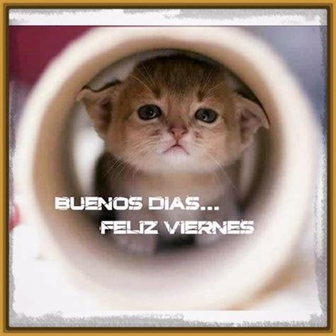 imagenes de gatitos tiernos de buenos dias perfectas imagenes de buenos dias con gatitos gatitos