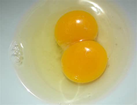 Yolk Egg how s robb monday harvest the yolked edition