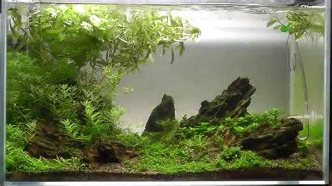 aquascape reviews aquascape iwagumi style 5th week update hd youtube