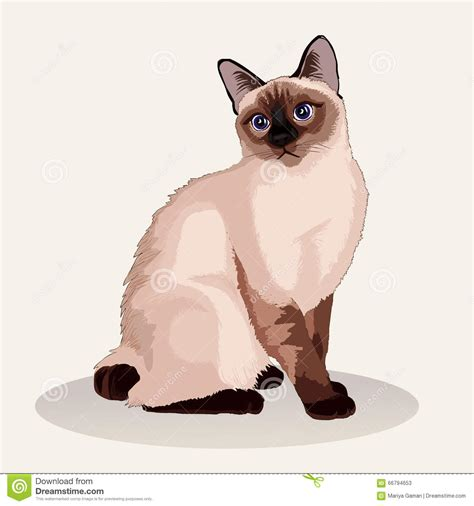Siamese Cat clipart cute kitten - Pencil and in color ... Free Clipart Of Siamese Cats