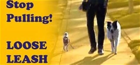 how to a not to pull while walking how to stop a from pulling while walking on a leash 171 dogs