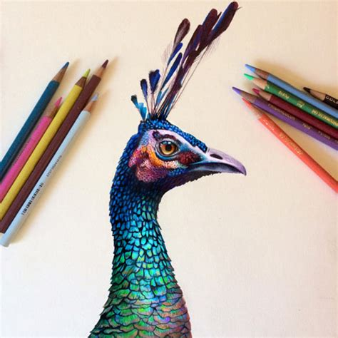 color drawings hyper realistic colored pencil portraits by