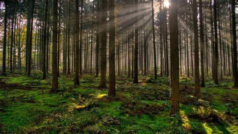 imagenes hd bosques wallpapers de bosques hd im 225 genes taringa