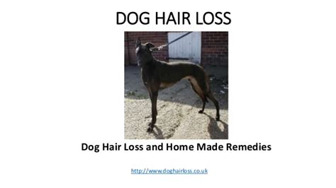 home remedys for dogs losing hair dog hair loss and home made remedies