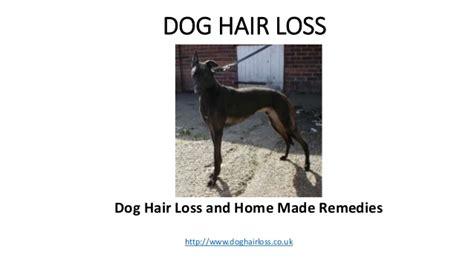 puppy hair loss hair loss and home made remedies