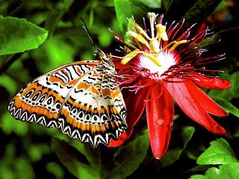 imagenes mariposas pequeñas fotos de mariposas im 225 genes de mariposas