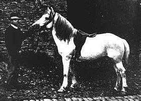 bidet cheval wikip 233 dia