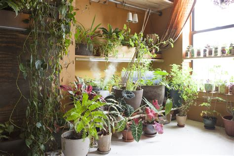 indoor plants nyc meet a woman who keeps 500 plants in her brooklyn