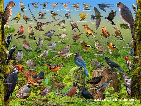 backyard birds of backyard birds of the west photograph by stuart clarke