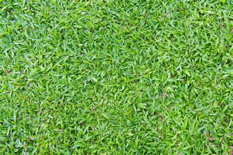 organic colours incorporate the green shades of grass natural outdoor green grass in the shade stock photo