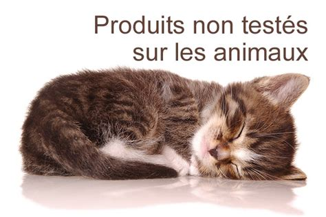 test animali choisir le meilleur pour nos animaux animalerie en ligne