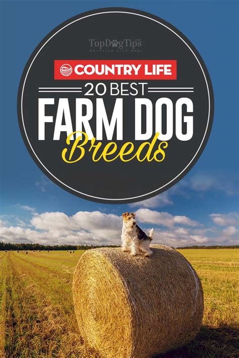 farm breeds 20 farm breeds for living in the country couture country