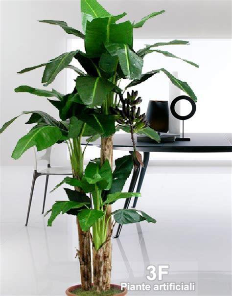 pianta di banano in vaso banano x 3 altezza cm 80 150 230 tronco naturale 216