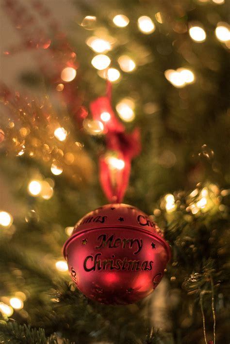red christmas bell  christmas tree photo  christmas image  unsplash