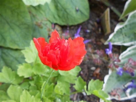 Piège à Taupe 2580 by My Rented Garden Lite Sm 229 Tt Och Gott Eller Blandat Bandat