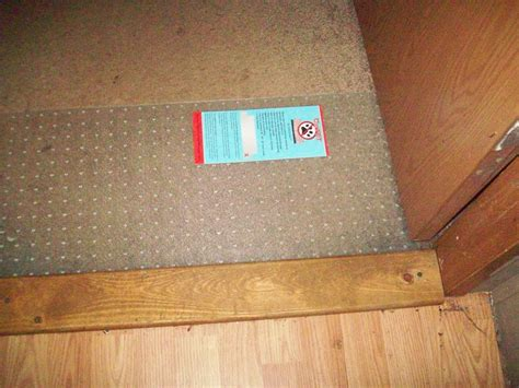 How To Stop Cat From On The Floor by Keeps Scratching The Carpet 28 Images How To