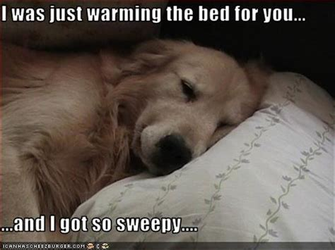 dog in bed meme sleeping in quotes like success