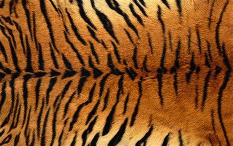 Zebra Fur Rug Tiger Print Full Hd Wallpaper And Background 1920x1200