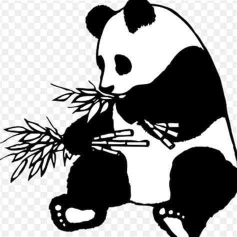wallpaper panda hitam putih mewarnai gambar kartun panda hitam putih aneka gambar gambar