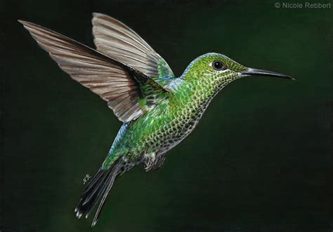 hummingbird drawing by quelchii on deviantart