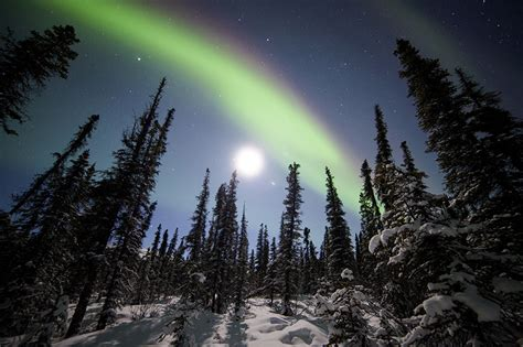 snowy alaskan cluster light tree pictures alaska usa denali national park polar light nature sky