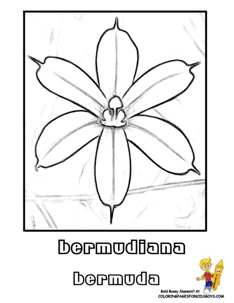yellow elder coloring page the yellow elder colouring pages