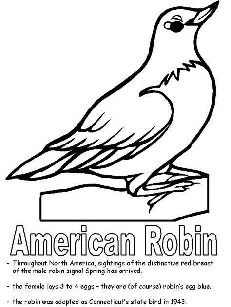 american robin coloring page american robin coloring page