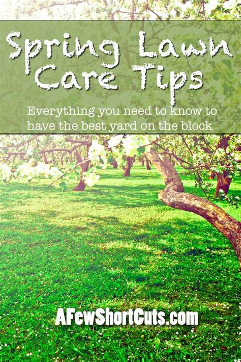 spring landscaping tips best 25 lawn care tips ideas on pinterest grass lawn
