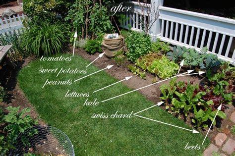front yard vegetable garden plans front yard vegetable garden one month update gardens